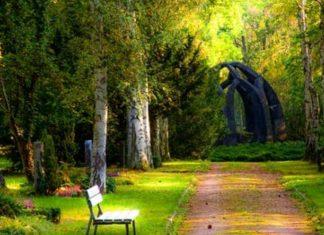 Tips for Creative Home Garden Design